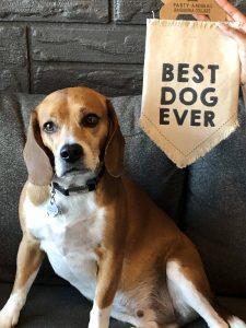 dog in dtsp 600 block ziggy dog best dog ever