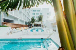 Pool behind a palm tree at the Sarasota Modern hotel in Sarasota, Florida